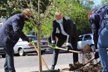 """""""Это знак"""": что произошло с деревьями, которые посадил Труханов в центре Одессы, фото"""