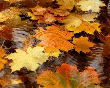 прогноз погоды, осень, ноябрь, листопад