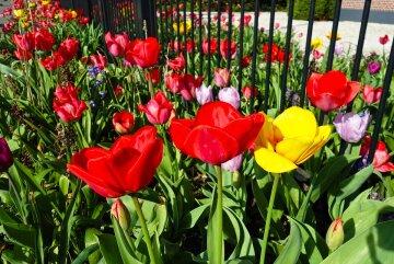 В Украине обнаружили бескрайнее поле редчайших краснокнижных цветов: яркие фото