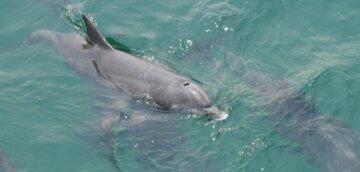 """Стая дельфинов устроила шоу в одесском порту, видео: """"подплывали к причалам и ..."""""""