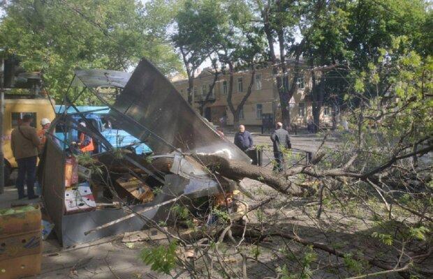 Дерево рухнуло на киоск с продавцом в центре Одессы, движение заблокировано: кадры ЧП