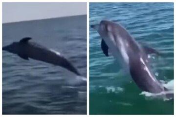 Плескались возле людей: одесский пляж посетили дельфины, видео