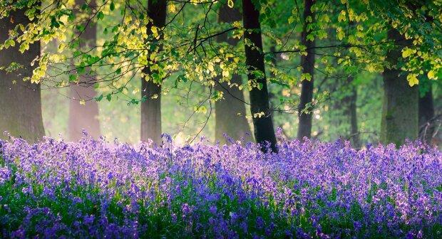 погода весна лето природа лес цветы