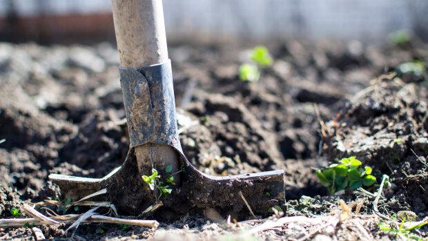 лопата, захоронение, раскопки