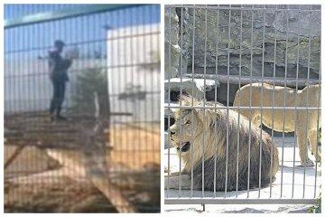 В одеському зоопарку чоловік забрався в клітку з левами: відео облетіло мережу