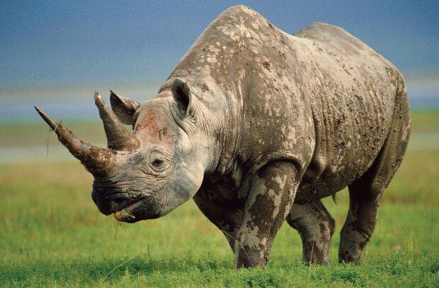 В Одеському зоопарку заступилися за африканських носорогів (фото)