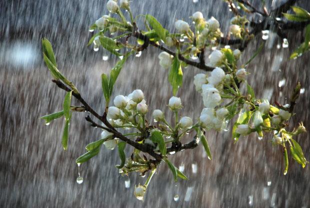 весна дождь