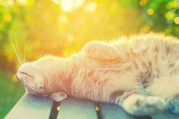 кошки-и-солнце1