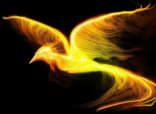 птица, фантастическая, сказочная, феникс