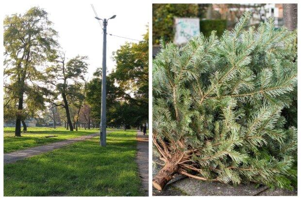 """""""Не убрали с Нового года"""": одесский парк завалили елками, кадры дикости"""
