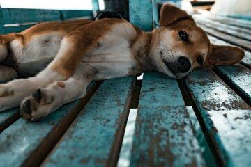 """Собачникам Харкова залишили тривожне послання: """"Цінуєте життя?"""""""