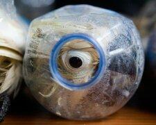 potd-smuggle-parro_3291161b (1)