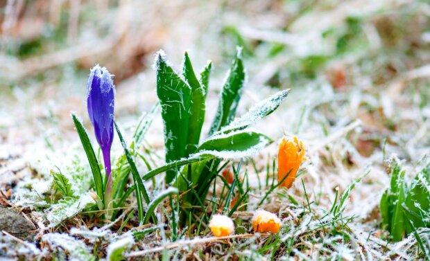 весна иней заморозки