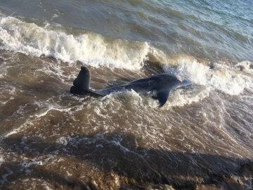 """Аномальная зима свела с ума дельфинов, на Азовском море необъяснимое: """"Подплывают к берегу, и..."""""""