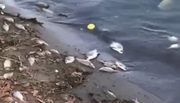 Риба плаває черевом догори: у мережі з'явилося відео екологічної катастрофи в Харкові