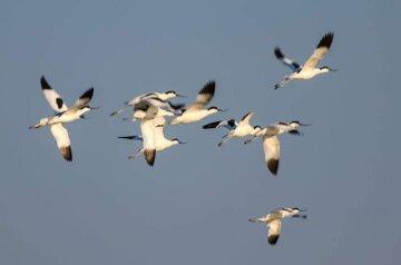 """Редкие птицы прилетели и принесли весну на Одесчину, кадры: """"впервые так рано"""""""