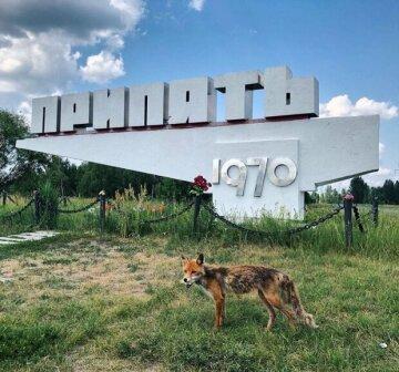 Екологічна катастрофа внесла корективи: як сьогодні виглядає місто-привид Чорнобиль, вражаючі кадри