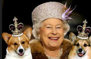 королева Елизавета, корги