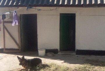 Жуткая история на Житомирщине: живодер устраивал расправу над собаками для вопиющей цели