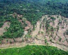 Амазония, лес, джунгли, вырубка