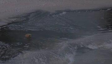 """В Киеве ребенок провалился под лед, патрульный бросился на помощь: """"услышал крики, детский плач и..."""""""
