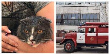 В огненной ловушке оказалась женщина с котом, кадры с места: экстренно слетелись спасатели