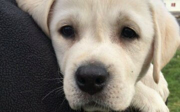 """Сотни собак кинули на произвол судьбы, в приюте бессильны: """"нет средств даже на корм"""""""