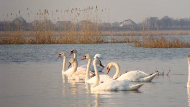 """Озеро на Одещині зникає на очах: """"катастрофа загрожує всьому живому"""""""