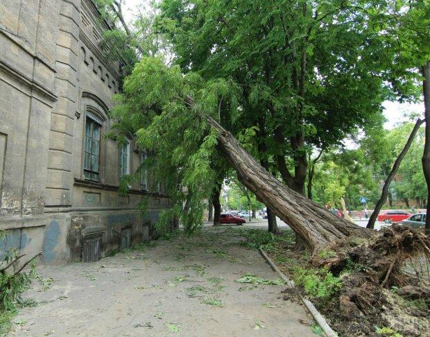 Ветер, Одесса, шквал, упавшее дерево, ураган, непогода