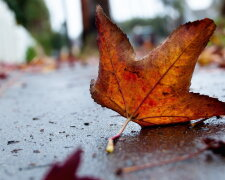 осень погода