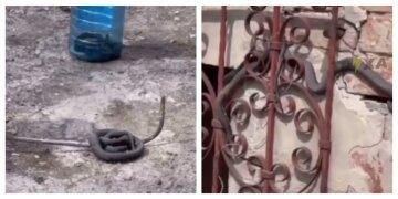 Харьковчане жалуются на нашествие змей, заползают в дома: жуткие кадры