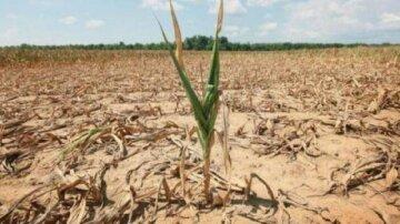 Шкоди на мільярди: посуха на Одещині призвела до катастрофічних наслідків
