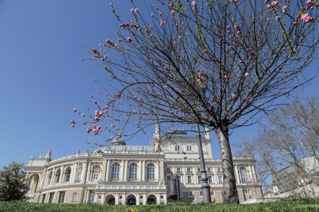 Сакури і магнолії розквітли в Одесі в розпал карантину: кадри неймовірної краси