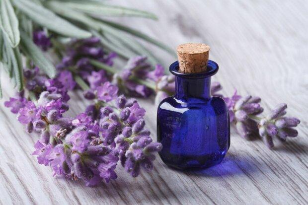 лаванда эфирное масло духи парфюм цветы