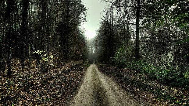 лес дорога природа