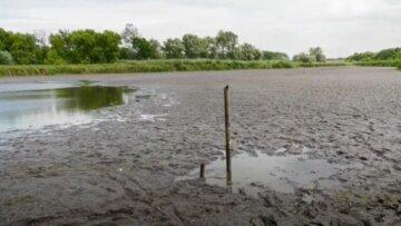 """Під Дніпром почалося справжнє екологічне лихо, кадри: """"Трупний запах на кілометри..."""""""