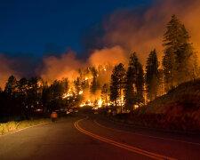 пожар, лес, лесной пожар