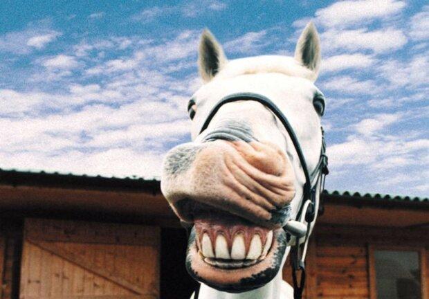 Почніть суботу весело: найкращі анекдоти 11 липня