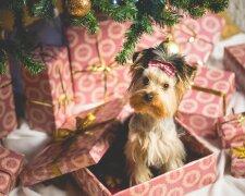 Астрологический гороскоп на 2018 год: чего ждать в год Собаки
