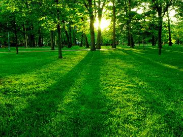 парк природа зелень трава деревья