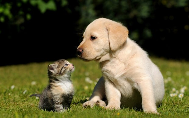 кошка, собака,