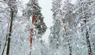 """Неймовірна зимова казка в """"Пущі-Водиці"""" приголомшила киян, барвисті фото"""