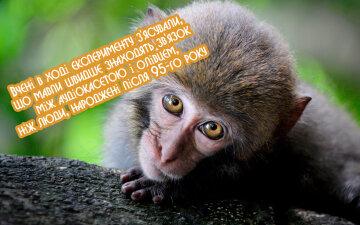 obeziana_milyj_vzgliad_122920_2560x1600