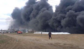 Опасную болезнь подтвердили на Буковине, сжигают тысячи животных: кадры с места