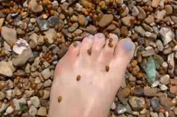 Полчища насекомых захватили украинские пляжи вслед за медузами и блохами: кадры нашествия