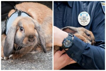 Кролика прийняли в Нацполіцію, відео: провів перший інструктаж
