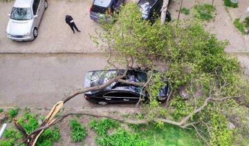 """""""Воскресло, чтобы навредить"""": в сети показали, как """"спиленное"""" дерево отомстило одесситам, фото"""