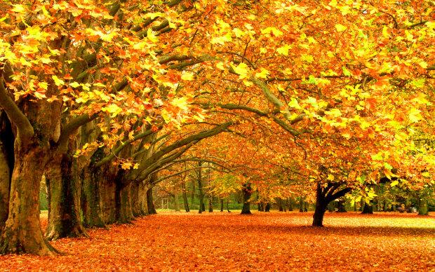 Осень, хорошая погода,