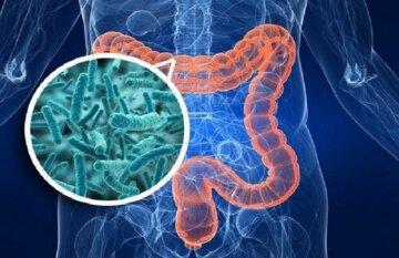 бактерии, болезнь