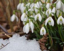 весна, погода,